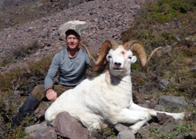 Alaska - Dall Sheep